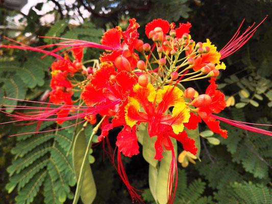Exotische Blüten © Ben Simonsen