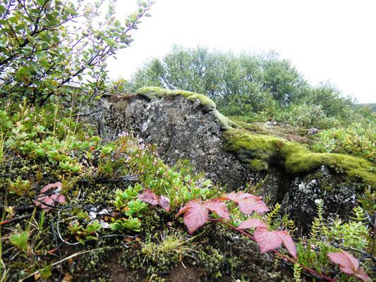 Isländische Landschaft
