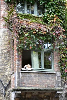 Ein Hundeleben in Brügge
