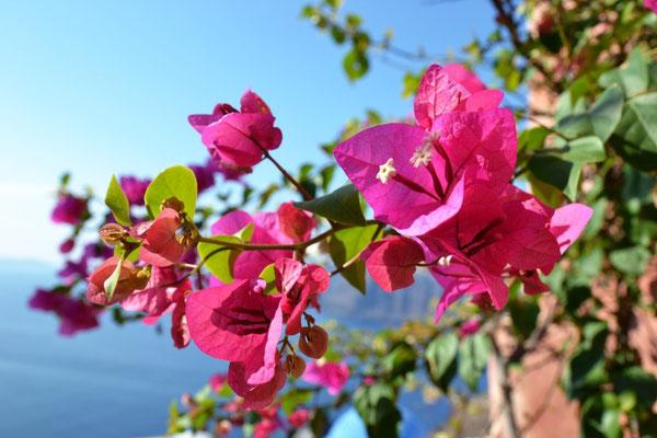 Leuchtende Blumen