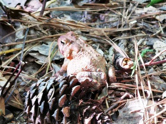 Frosch im First Landing State Park © Ben Simonsen