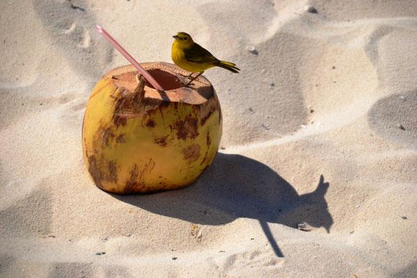 Durstiger Vogel am Strand