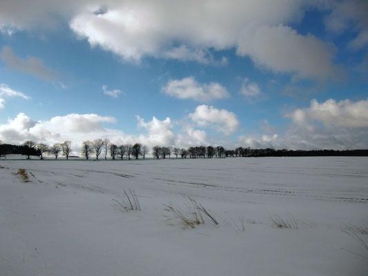 Schneebedecktes Feld