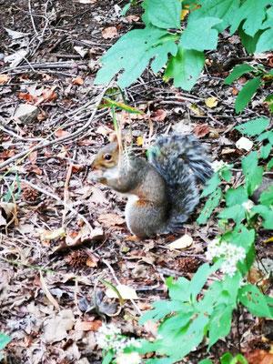 Eichhörnchen © Ben Simonsen