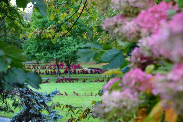 Public Gardens ©Ben Simonsen