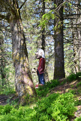 Trollwald auf dem Floyen