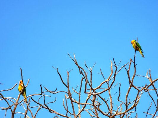 Papageien © Ben Simonsen