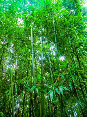 Bambusgarten im Botanischen Garten