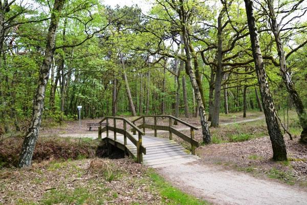 Brücke im Waldgebiet