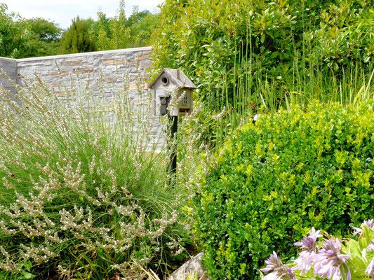Fleurs de lavandes laissées au profit des insectes pollinisateurs - © NADEA
