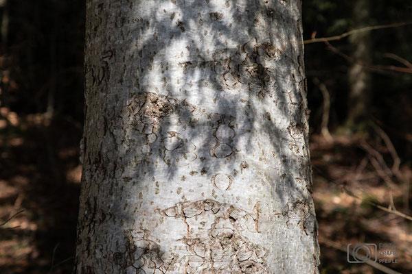 Schatten am Baumstamm