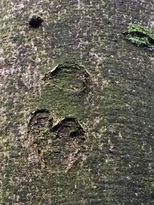 Gesicht-Herz-Baumrinde