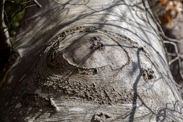 Baum Kreis