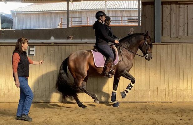 Sandokan in der Piaffe im Unterricht bei Esra Ruhland - Reiten in Balance