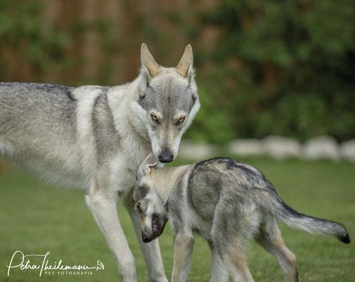 Delphi und Welpe Kismet Spirit of the wolf