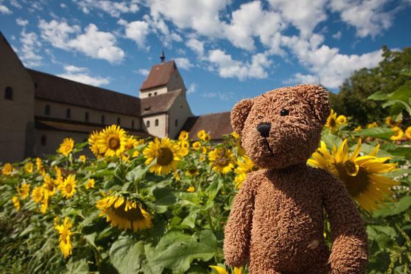 Sonne, Sonnenblumen, ein Weltkulturerbe und ich auf der Insel reichenau im Bodensee.