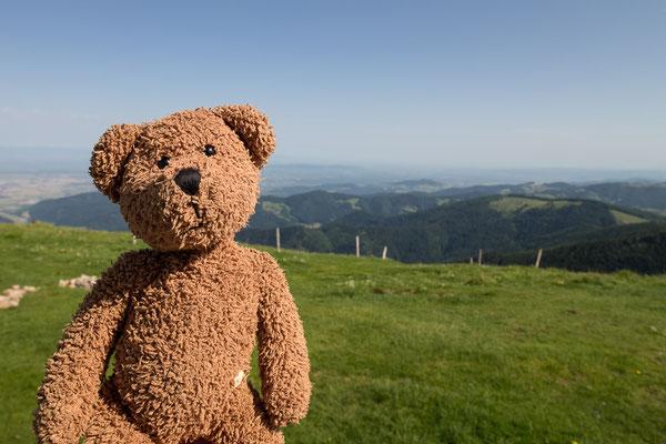Hier bin ich Bärgsteiger gewesen und stehe auf dem zweithöchsten Gipfel des Schwarzwalds: dem Blechen.