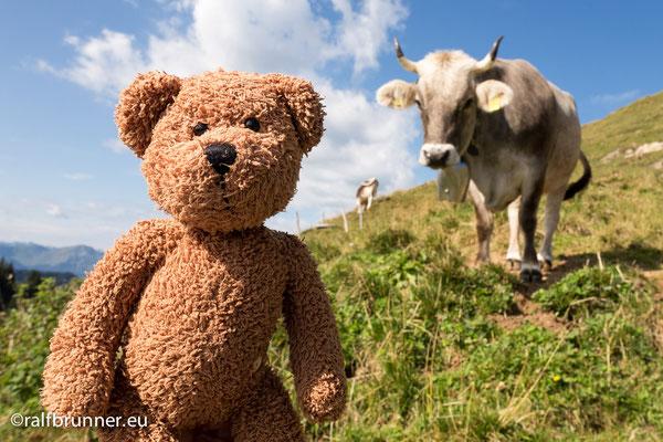 """Hier im Allgäu kann man überall frische Milch direkt von der Quelle zapfen. Ich verkaufe die dann unter dam Label: """"Bärenmarke""""!"""