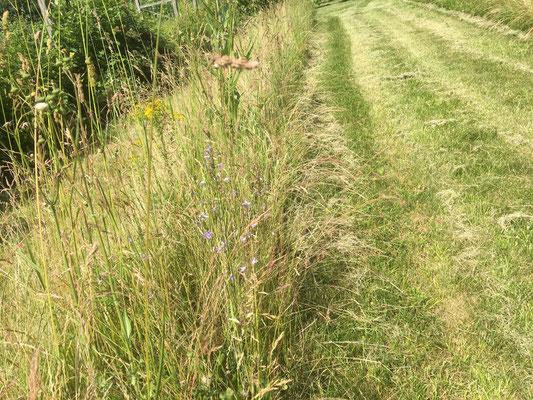 Ökoelement - Altgrasstreifen