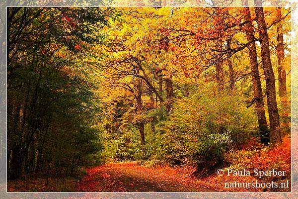 herfstsfeer in de Eifel