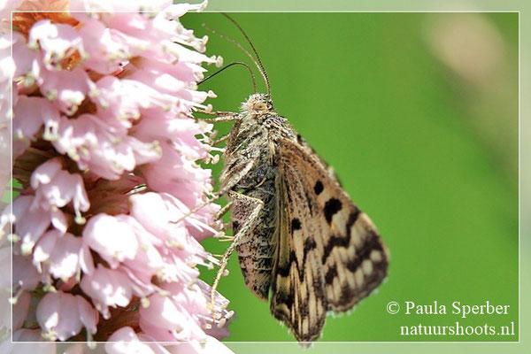 mi-vlinder
