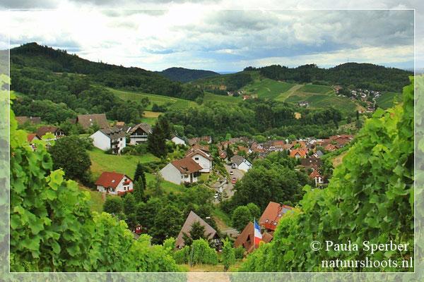 tussen de wijnranken Sasbachwalden