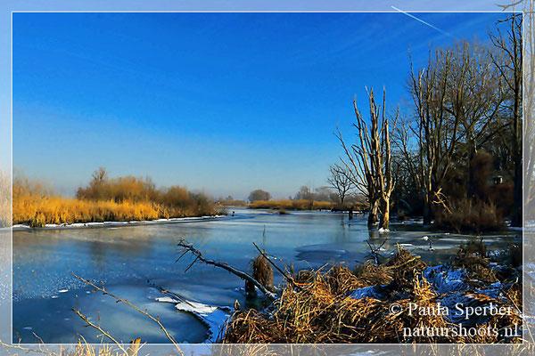 bevroren kreekje in de biesbosch