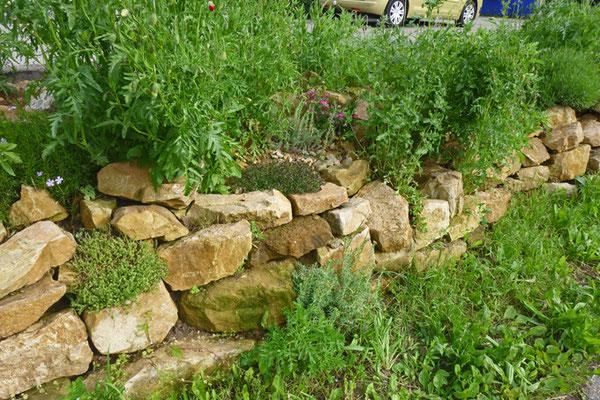 Trockenmauer Mai 2013, Foto: A. Treffer