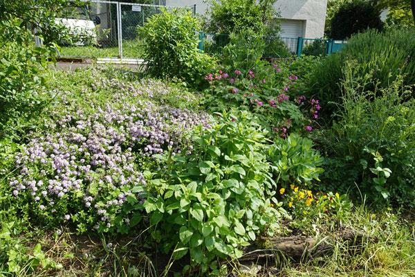 Pflanzterrasse Mai 2016, Foto: A. Treffer