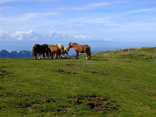 Les chevaux de Barraquand sur Font d'Urle
