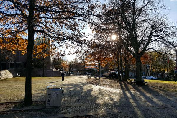 Baumsilhouetten am Rathausplatz