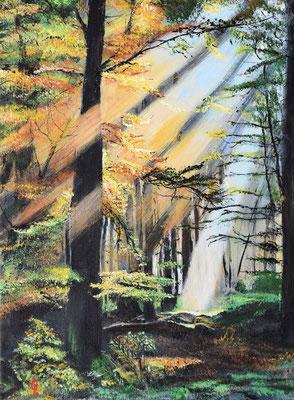 Bild-Nr. 7742 Titel: Waldduft