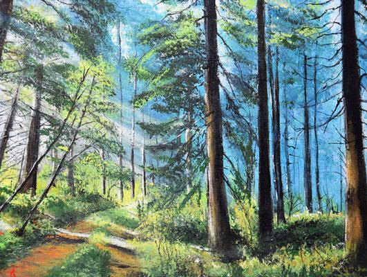 Bild-Nr. 6145 Titel: Tellerhäuser - Waldspaziergang
