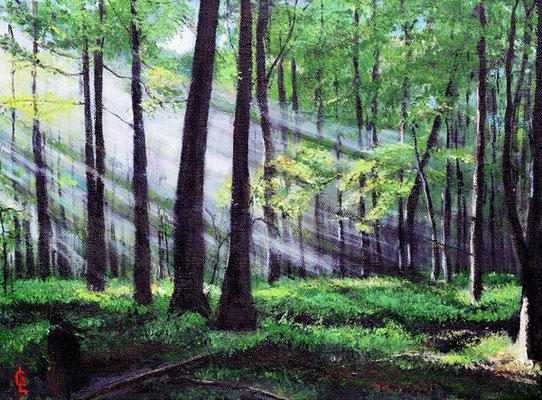 Bild-Nr. 9204 Titel: Waldesruh