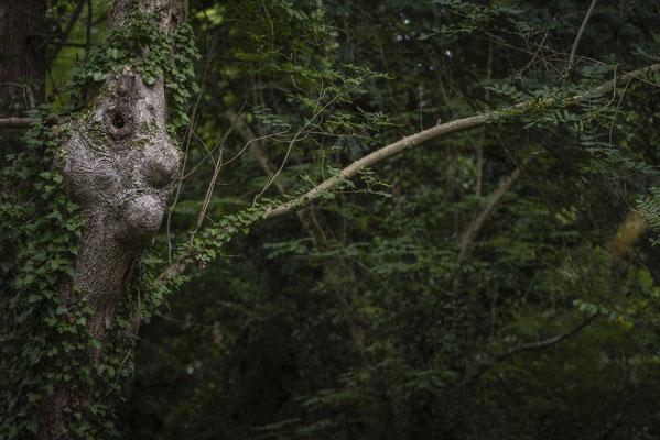 Pointe du Millier - Der Waldmensch
