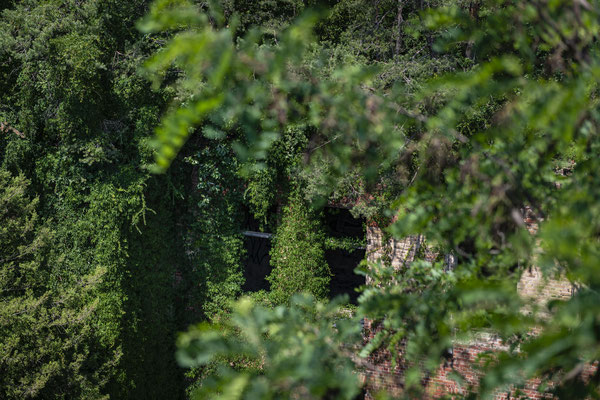 Der Baumkronenpfad der Beelitz Heilstätten