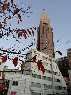 昨日まであった葉っぱが何枚も落ちますた…。 【2014年12月2日】