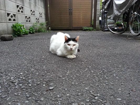 お疲れにゃん! 明日から来週火曜日まで東京にいないので、ぬこ田さんとは暫しの別れ。元気でにゃ! 【2014年9月17日】