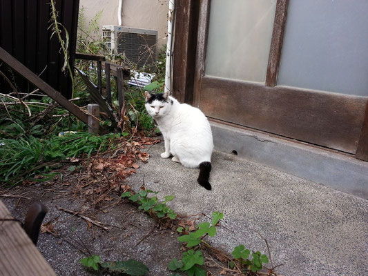 こんにゃちにゃ! 久しぶりのぬこ田にゃん♡ 【2014年11月10日】