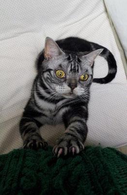 寅っ! それはジーパンではなく、セーターだぉ! すかも、スリラーの時のマイケルの目をすてるし。 【2012年11月21日】
