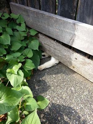 猛暑日につき、頭隠して足はみ出る! あはは。 【2014年7月14日】