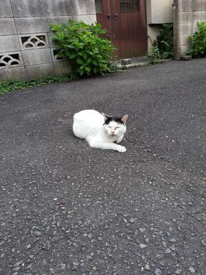 久しぶりのぬこ田さん。おはようにゃん! 【2014年7月23日】