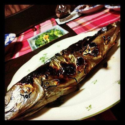 新企画・マドンナ櫻井さんちの鯖の塩焼きで 遊ぼうのコーナーだぉ!  鯖に潜むグレイ、そしてスクリームまで... 【制作日/2012年2月25日】