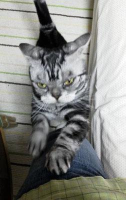 寝起きガリガリ…涙目でつ。そすて今日もピン甘。 【2012年5月17日】