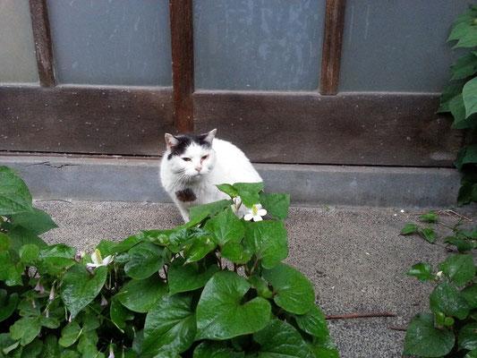 ぬこ田健作さんにおかれますては雨の中、お風邪など召されませんように、でつにゃ。 【2014年5月21日】