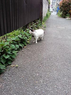 どくだみハウスの庭に入る前、周辺を地廻りすてますた。 【2014年5月5日】