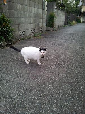 今朝のぬこ田健作さん。 【2013年11月6日】