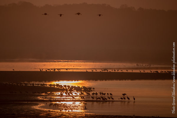Lever de soleil sur le lac de Der