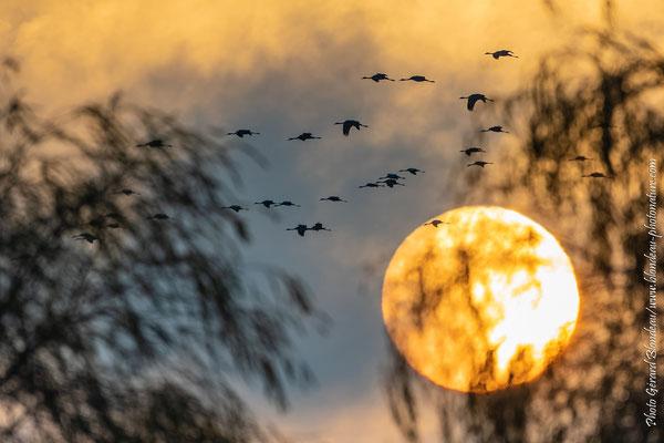 Coucher de soleil sur le lac de Der