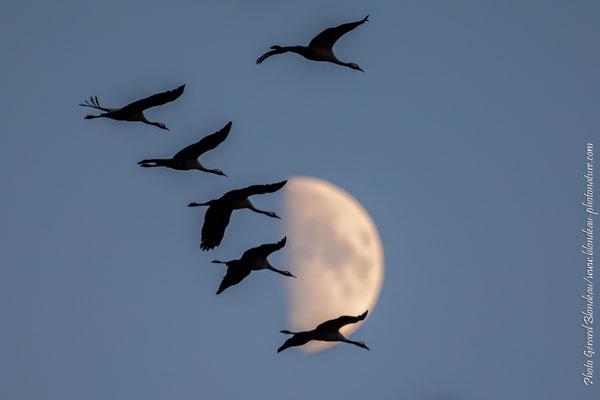 Grues dans la lune